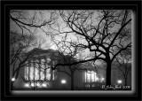Trees & Capitol in Fog