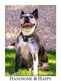 Happy_Sam_8322_Boston_Terrier.jpg