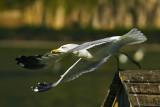 Take off_JLB0709.jpg