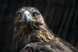 Kite portrait #2