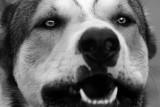 Dog_JLB8047.jpg