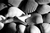 Shells And Shadows