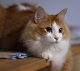 cat at f1.4