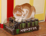 Mine puff ball! If you want a shreading, just try getting one of my MONSTER drinks..