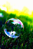 Bubble on the Grass