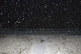 Snow falling March 29, 2007