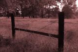 Fence Near Our House, Sepia