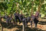 Balade dans les Côtes de Blaye