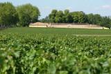 Château Margaux, 1er cru classé dans l'appellation Pauillac