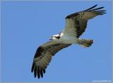 Osprey 20