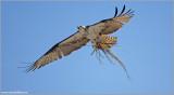 Osprey 29