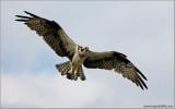 Osprey 38