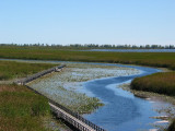 Point Pelee National Park/Pelee Island, Leamington, Ontario