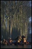 WM-2007-02-04-0092- Versailles - Alain Trinckvel-01 copie.jpg