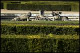 WM-2007-03-11-0405- Versailles - Alain Trinckvel-01 copie.jpg