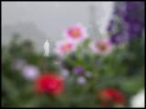 WM-2007-06-10-0108  - Versailles - Alain Trinckvel-2 copie.jpg