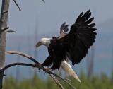 Eagle Landing 09_17_07.jpg
