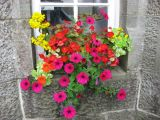 Flowerbox in a tearoom window