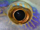 Eye So Blue.