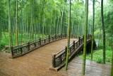 Bamboo deco + bush.jpg
