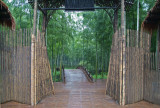 Bamboo deco + forest.jpg
