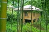 Bamoo housein bush.jpg