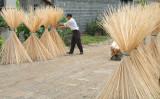 Drying the bamboo sticks.jpg