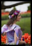 Tulip fairy profile
