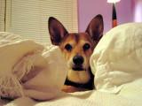 Hey, I'm tryin' to sleep!