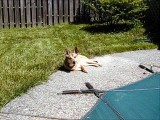 Taco liked to sunbathe.  She'd lay on the stone deck  whenever the sun was shining.