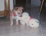 Little dog, big toy :)