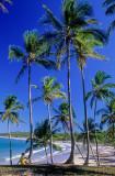 coqueiral ilha boipeba com nativo primeiro plano.jpg