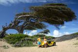 Árvore do Amor, Maxaranguape-RN_MG_3715