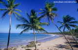 Coqueiral na Iha de Boipeba, praia da cueira, Arquipélago de Tinharé, Cairu-BA