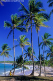 Coqueiral na Iha de Boipeba - praia da cueira, Arquipélago de Tinharé, Cairu-BA