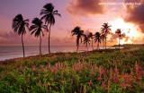 Nascer do sol na Praia da Lagoinha, Paraipaba, Ceara  0512