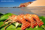 Lagostas na praia de Ponta Grossa, Icapuí_3912