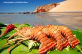 Lagostas na praia de Ponta Grossa, Icapuí_3913