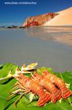 Lagostas na praia de Ponta Grossa, Icapuí_3917
