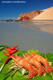 Lagostas na praia de Ponta Grossa, Icapuí_3919