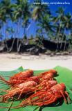 lagostas do seu guido - Praia da Cueira, Ilha de Boipeba, BA