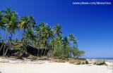 coqueiral na ilha de boipeba3.jpg