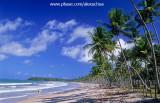coqueiral na ilha de boipeba4.jpg