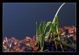 Herbstwasser.jpg