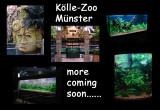 The new Kölle-Zoo Münster