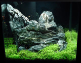 rescaped after 6 month