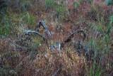 Sagebrush and Grasses