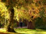 Refreshing walk