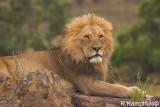 Mammals Kenia/Tanzania - Dieren Kenia/Tanzania