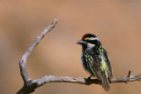 Namibia Birds - General Gallery